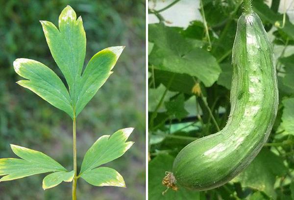 Признаки недостатка калия у растений