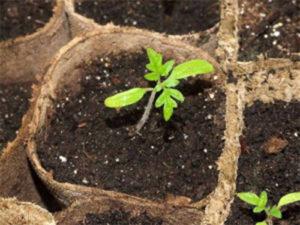 Удобрение мочевиной рассады