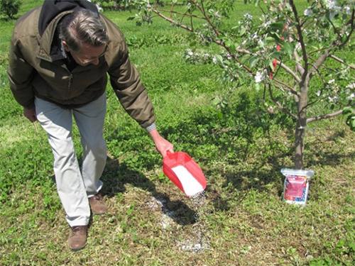 Подкорм деревьев калиевыми удобрениями