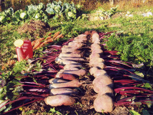 Урожай полученный после применения удобрения Байкал