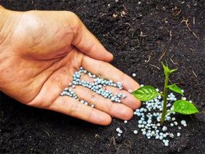 Внесение калийных удобрений в почву