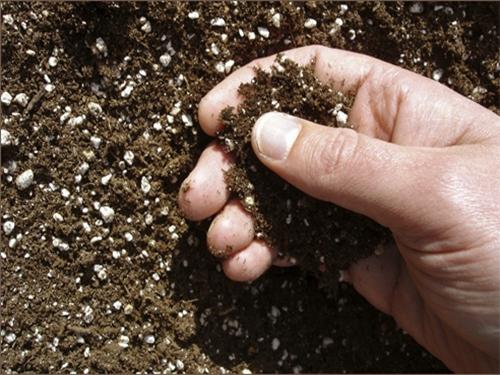 Почва удобренная мочевиной