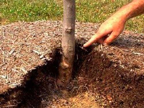 Мульчирование почвы, для повышения плодородия