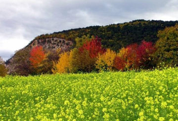 Посев сидератов осенью под зиму
