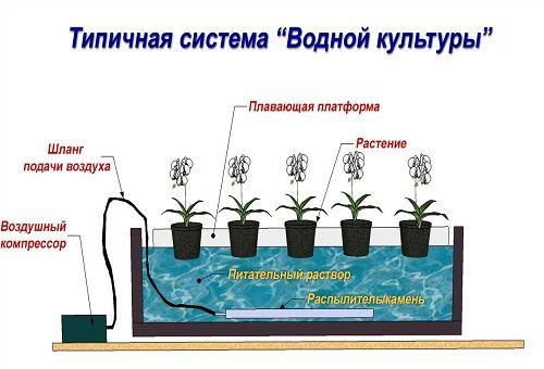 Конструкция простейшей гидропонной установки