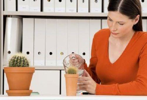 поливка кактуса