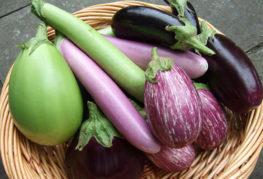 Плоды разных видов баклажанов