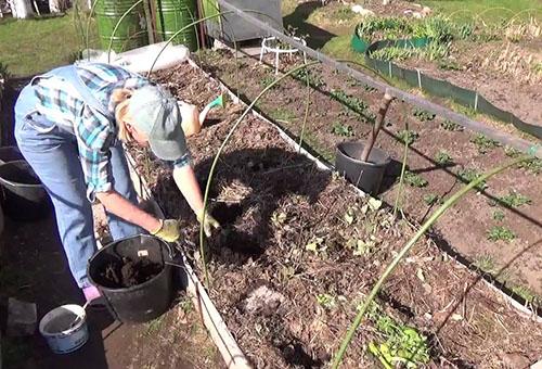 Подготовка грядки для баклажанов и перца