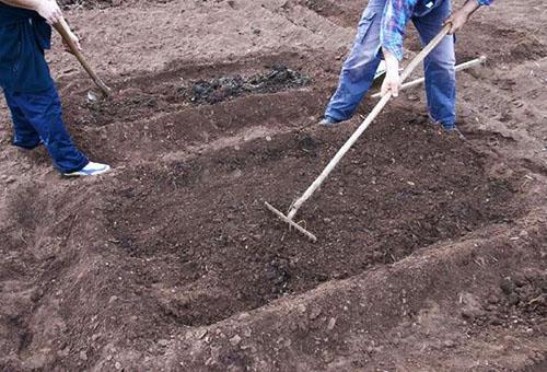 Подготовка грядки для земляники
