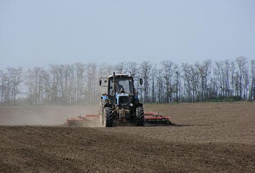 Посадка рассады кукурузы в открытый грунт – пять правил большого урожая