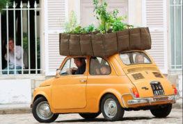 Перевозка растений на дачу