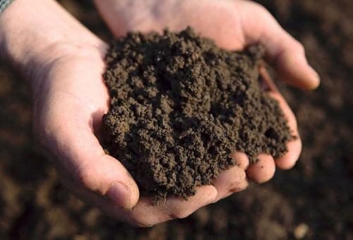 Почва для теплицы