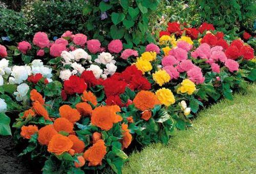 Цветы многолетники для сада - неприхотливые и