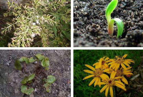 Размножение цветов семенами