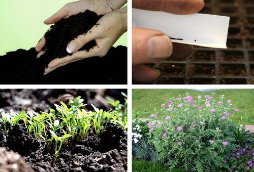 Грунт для цветов и размножение