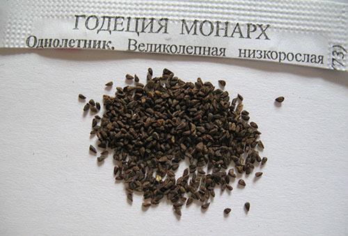 Семена годеции сорта Монарх