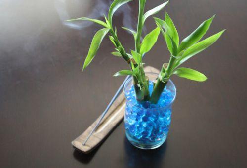 бамбук в гидрогели