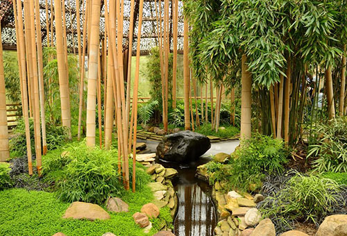 Высокий бамбук в саду
