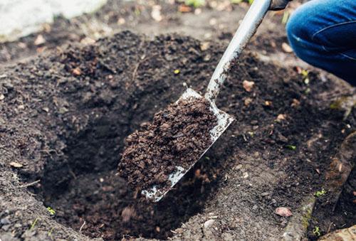 Подготовка почвы для розы