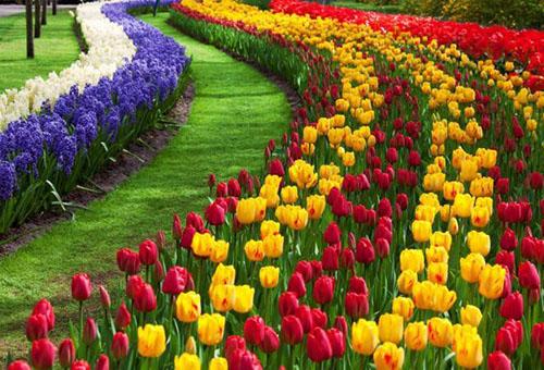 Дизайн участка с луковичными цветами