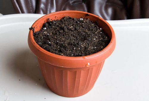 горшок для цветка наполненный грунтом