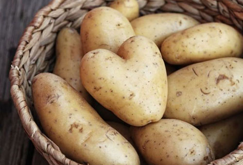 Выращивание картофеля в мешках: особенности технологии