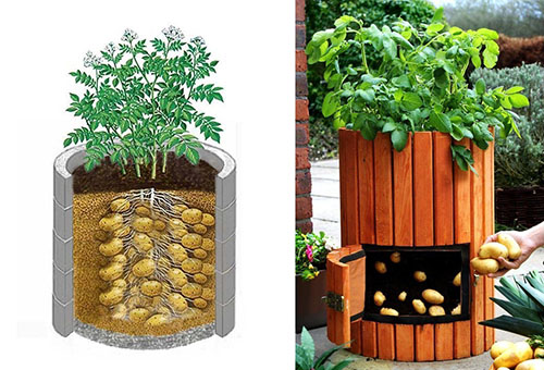 Схема выращивания в бочке