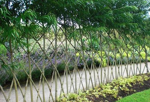 Решетка из живого бамбука