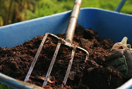 Выращивание брусники на приусадебном участке