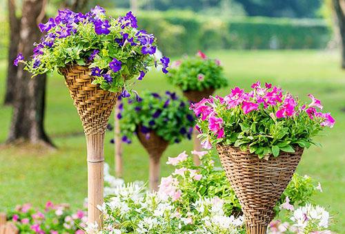 Цветы в декоративных плетеных кашпо