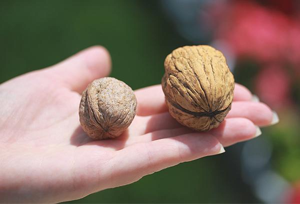 Грецкие орехи разных размеров