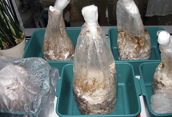 Подготовка субстрата для грибов