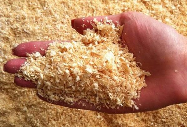 Выращивание опят в домашних условиях - на пнях, в банках и пакетах