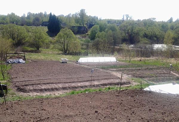 Почва, подготовленная для сидератов