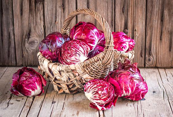 Урожай краснокочанной капусты