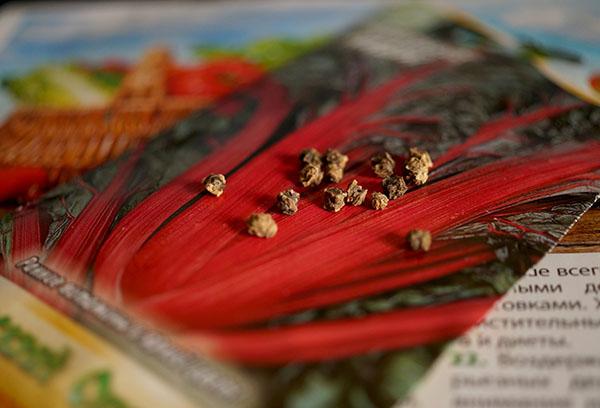Семена мангольда