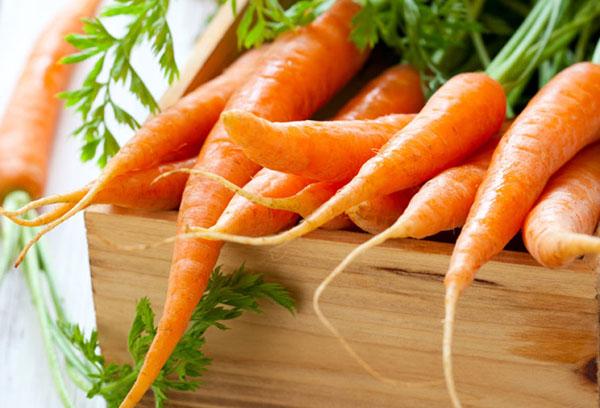 Посадка моркови весной в открытый грунт