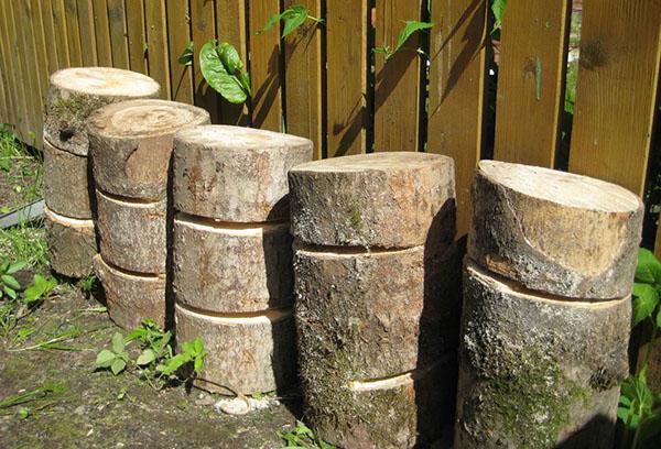 Пеньки для выращивания грибов
