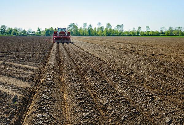 Подготовка поля для посадки картофеля