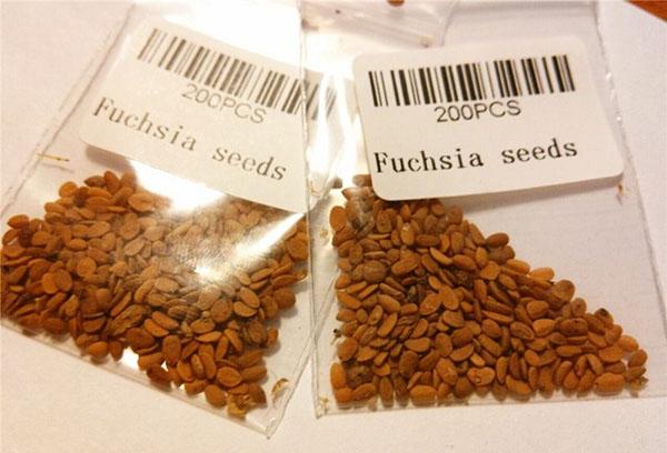 Семена фуксии