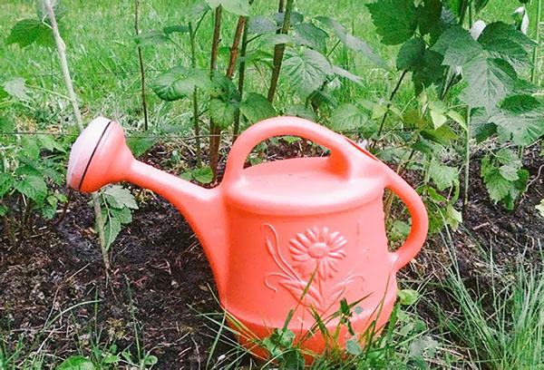 Садовая лейка для полива малины
