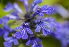 Сиреневые цветки