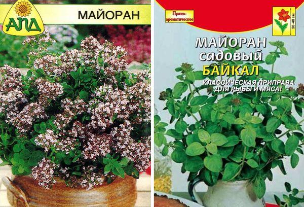 Майоран посадка и уход в открытом грунте, выращивание из семян, секреты хорошего урожая