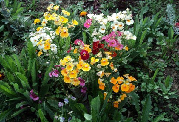 Цветы в грунте