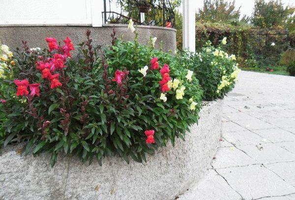 Ландшафтные цветы