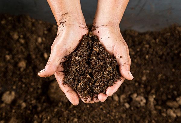 Торф для удобрения почвы