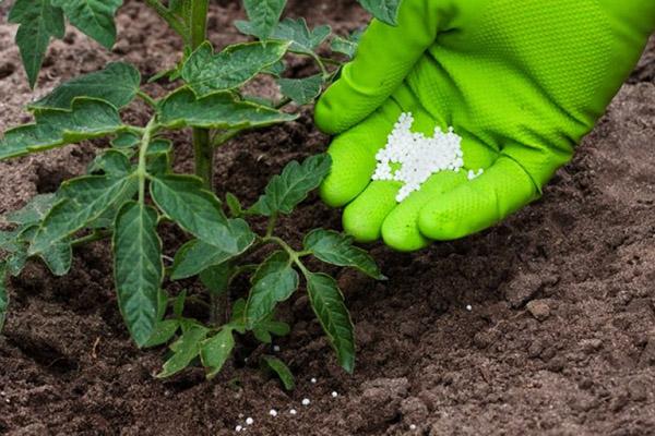 Минеральные удобрения для томата
