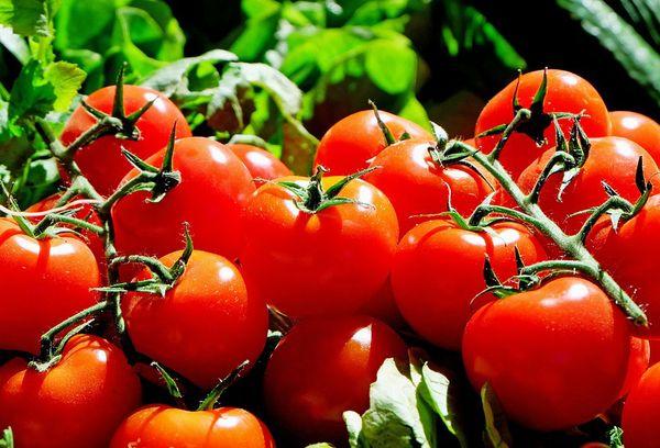Спелые красные помидоры
