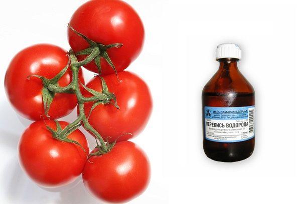 Красные помидоры и перекись водорода