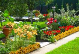 цветы на дача